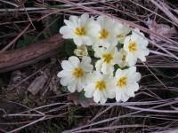 lulli lorella